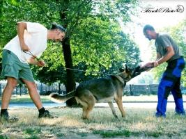 kutya, nyíregyháza