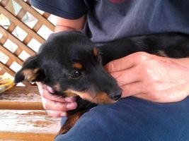 Peti, a mozgássérült kutya